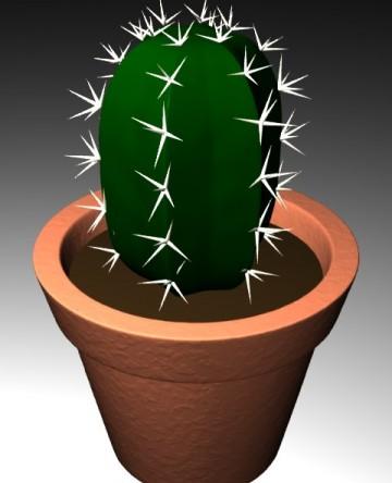 medium_cactus.jpg
